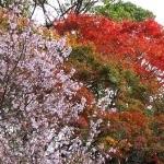 須磨公園(2).jpg